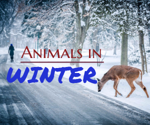 Saturdays at the Museum Presents Animals in Winter at The REACH Museum in Richland, WA