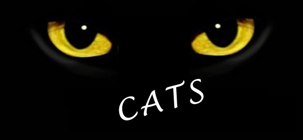 Mid-Columbia Musical Theatre Presents - CATS In Richland, Washington
