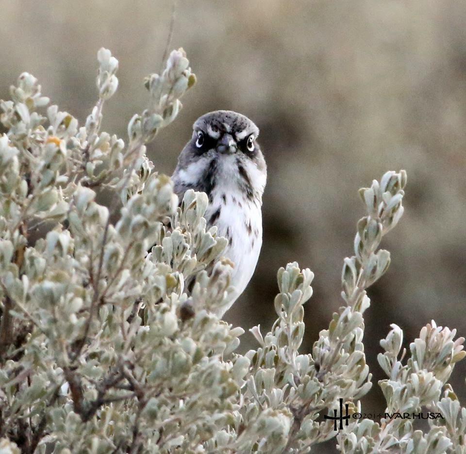 Lower Columbia Basin Audubon Society Monthly Meeting Kennewick, Washington