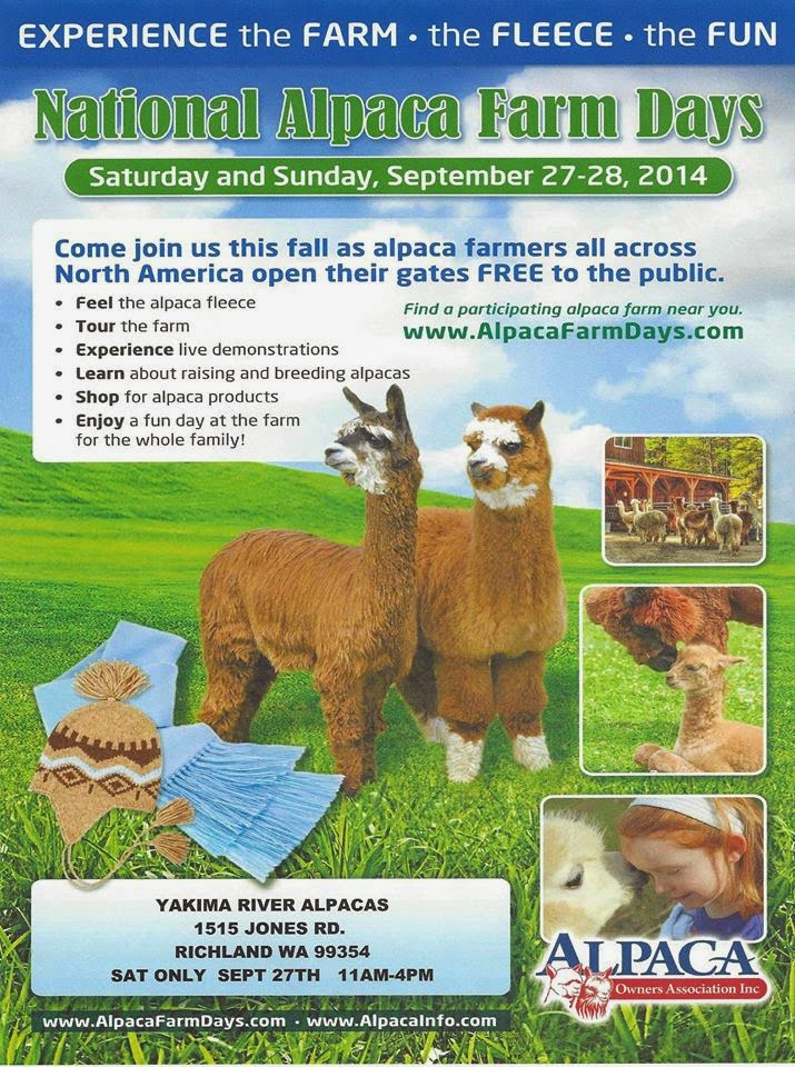 National Alpacas Farm Day At Yakima River Alpacas Richland, Washington
