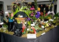 South Central Washington Orchid Society Show And Sale Kennewick, Washington