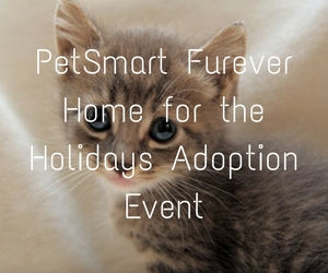 PetSmart Furever Home for the Holidays Adoption Event: Make a Pet's Life Better This Season| Kennewick