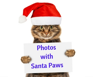 Photos with Santa Paws: High-Quality Photos of Santa With Pets | Pet Over Population Prevention in Richland, WA