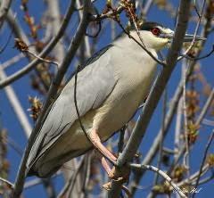 Saturday Morning Bird Walk At Wye Park In Richland, Washington