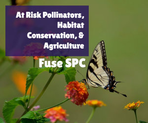 at risk pollinators image