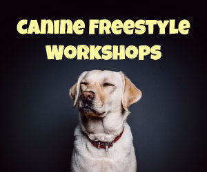 Canine Freestyle Workshops
