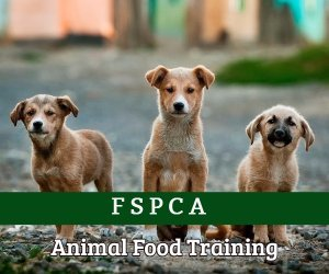 Animal Food Training