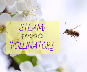 Steam Presents Pollinators