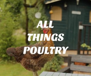 All Things Poultry